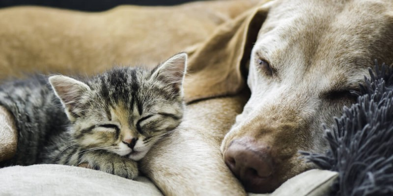 Make sure your home is a happy one for new pets